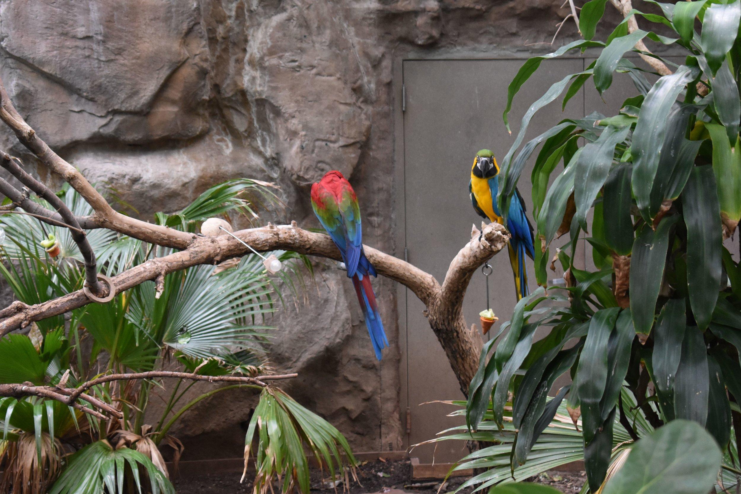 Denver Zoo day 20.jpg