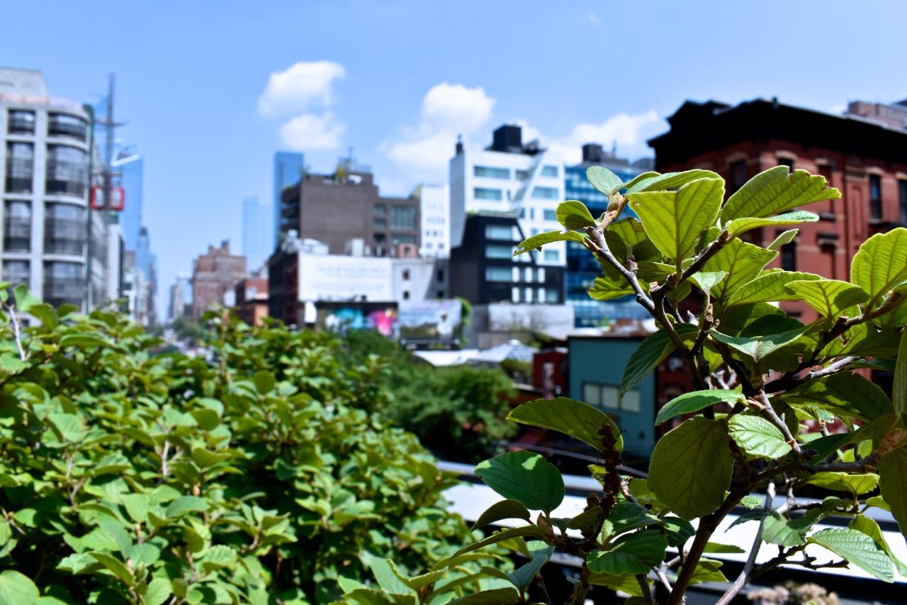 New York City August 2019 Highline and Hudson Yards 13.jpg