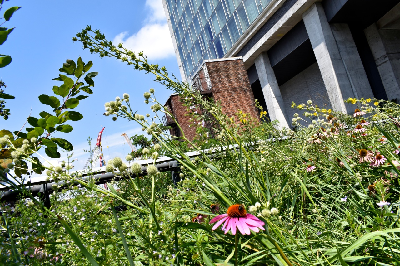 New York August 2019 Highline and Hudson Yards 22.jpg