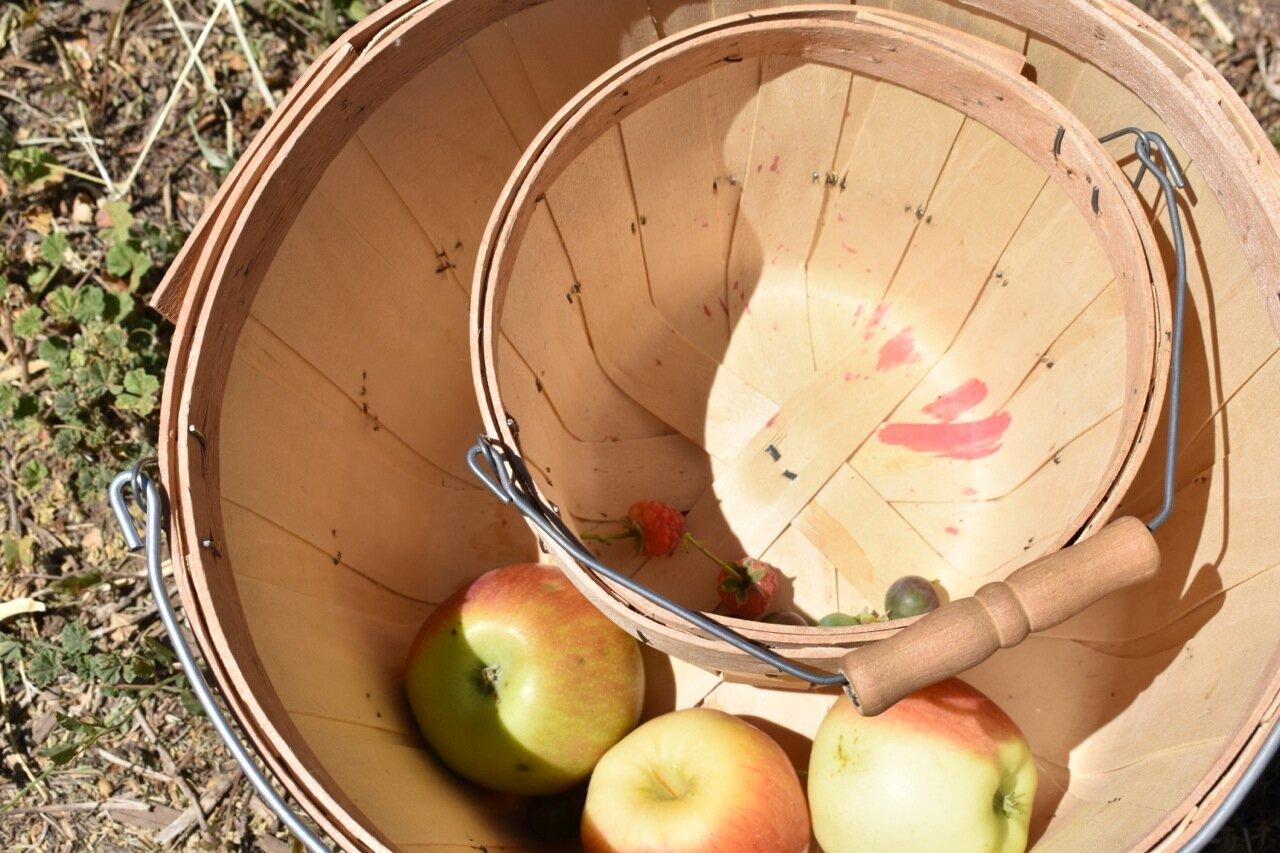 Big Bs Orchard September 2019 40.jpg
