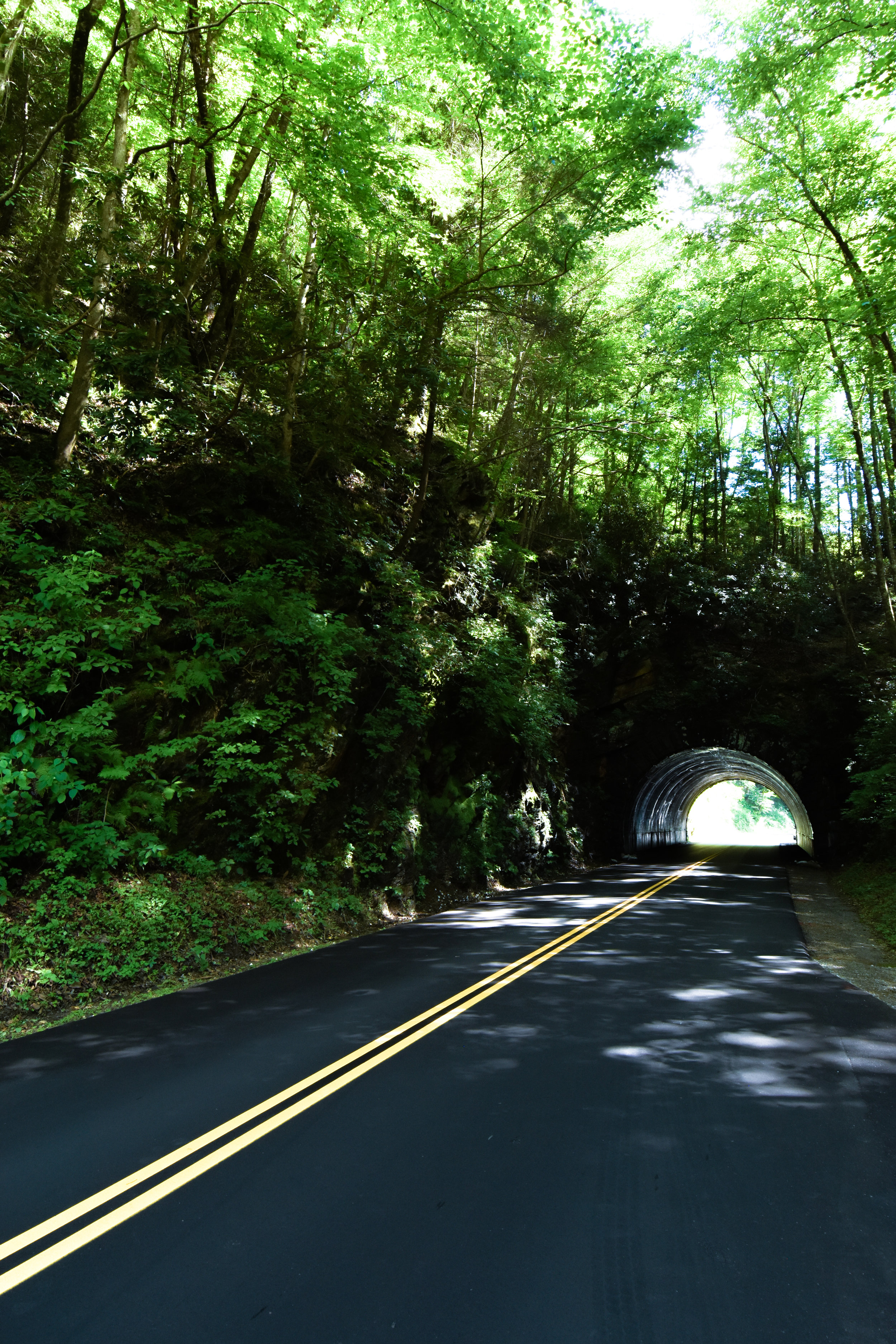 Tunnel Vision in GSMNP