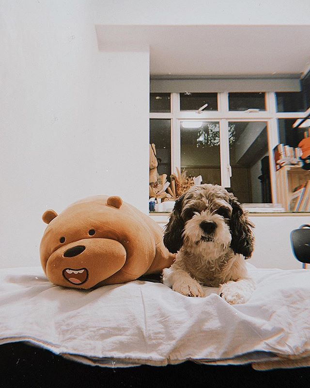 he finally got a same-sized friend 🥰