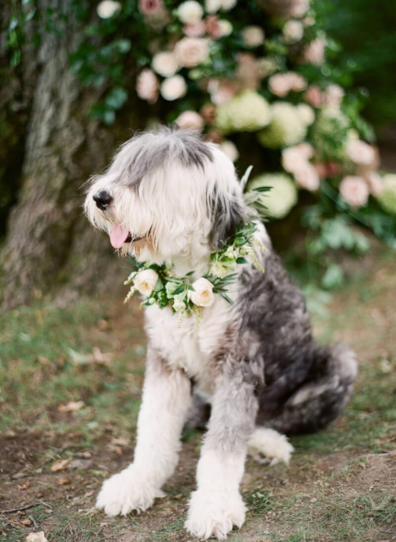 dogs-in-weddings-the-carolinas-magazine.jpg