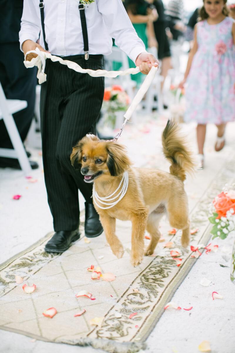 dogs-in-weddings-the-carolinas-magazine-6.jpg