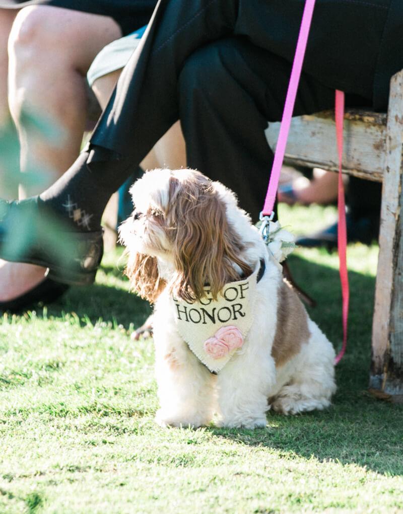 dogs-in-weddings-the-carolinas-magazine-5.jpg