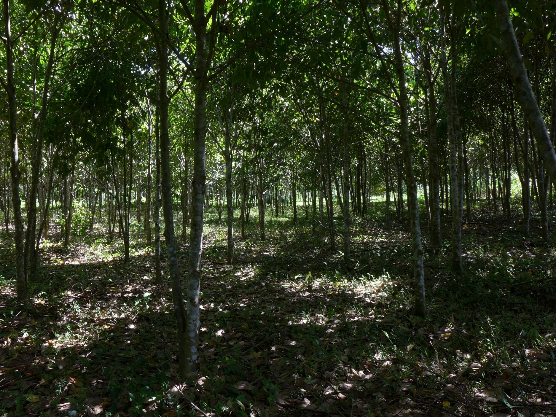 The Living Seed Bank is a working farm made up of productive Agroforestry Systems, a tangible model -