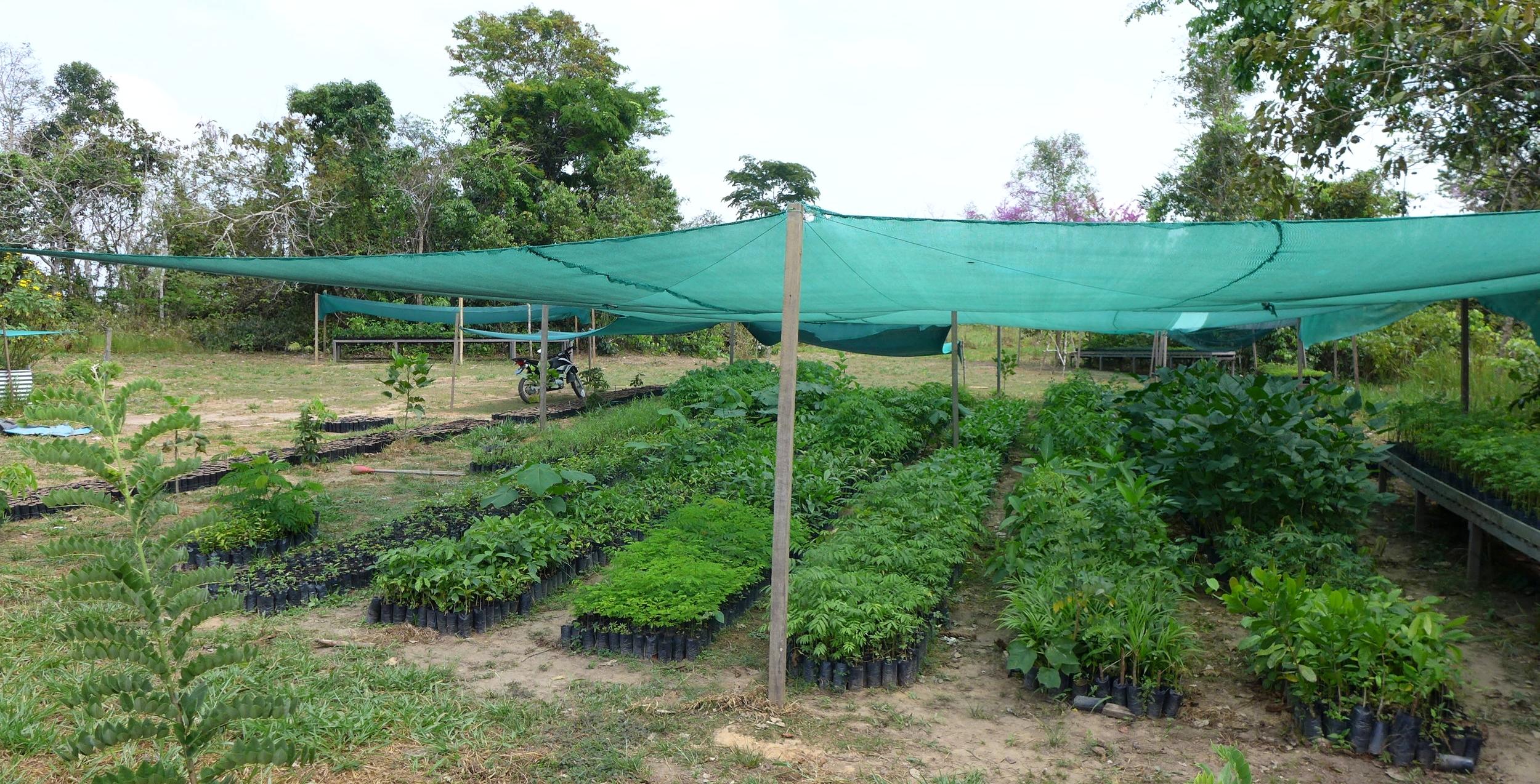 One area of the Camino Verde La Joya Forestry Nursery