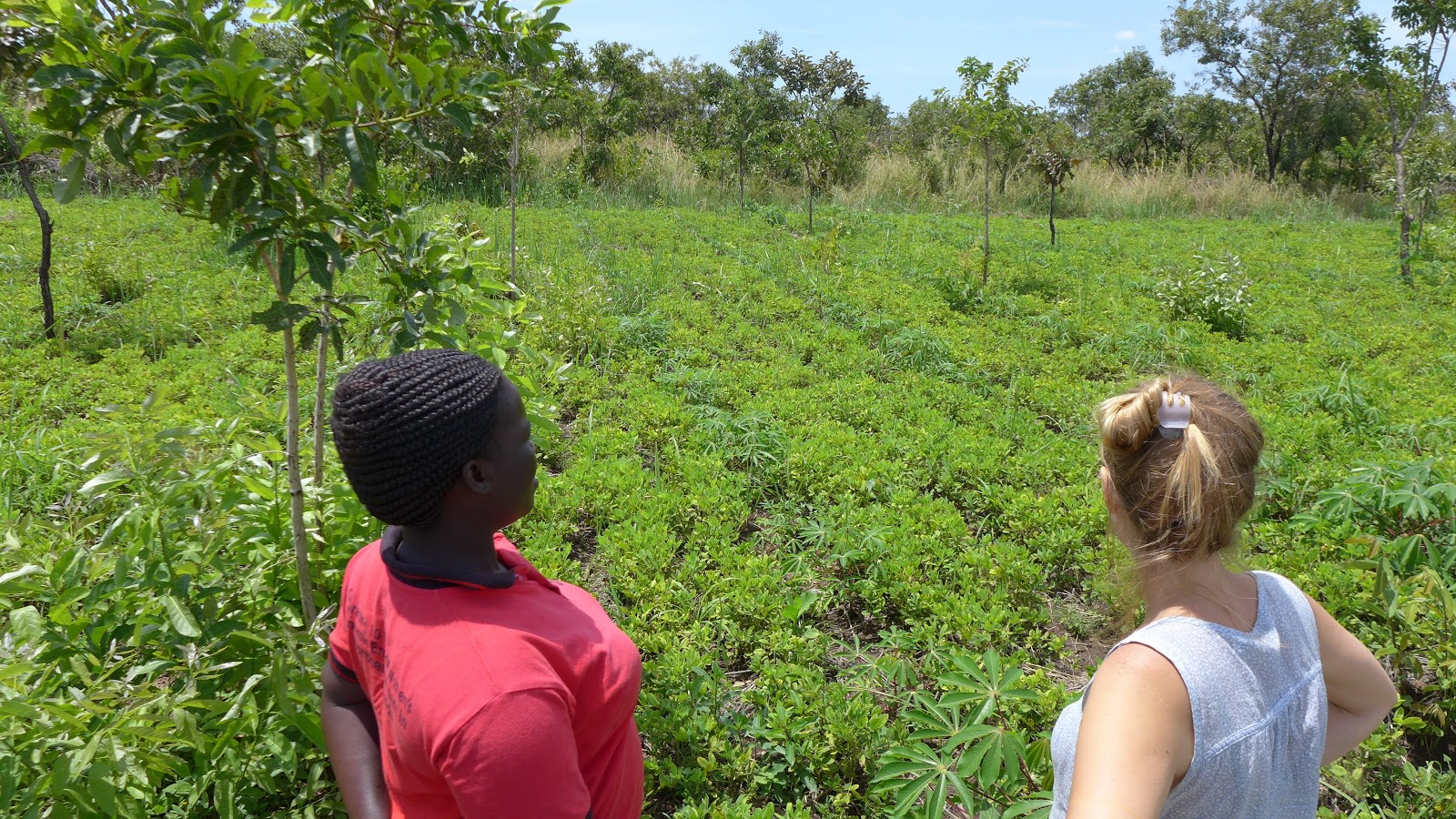 Overlooking a polyculture of peanuts, cassava, and natural regeneration of native trees.
