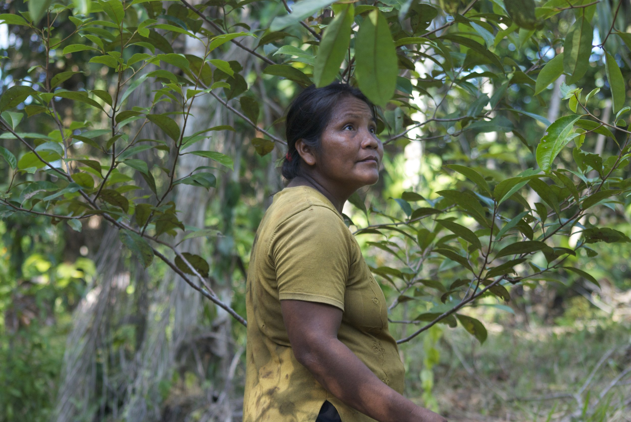 A Bora farmer in Ampiyacu with a 5-year old rosewood tree.