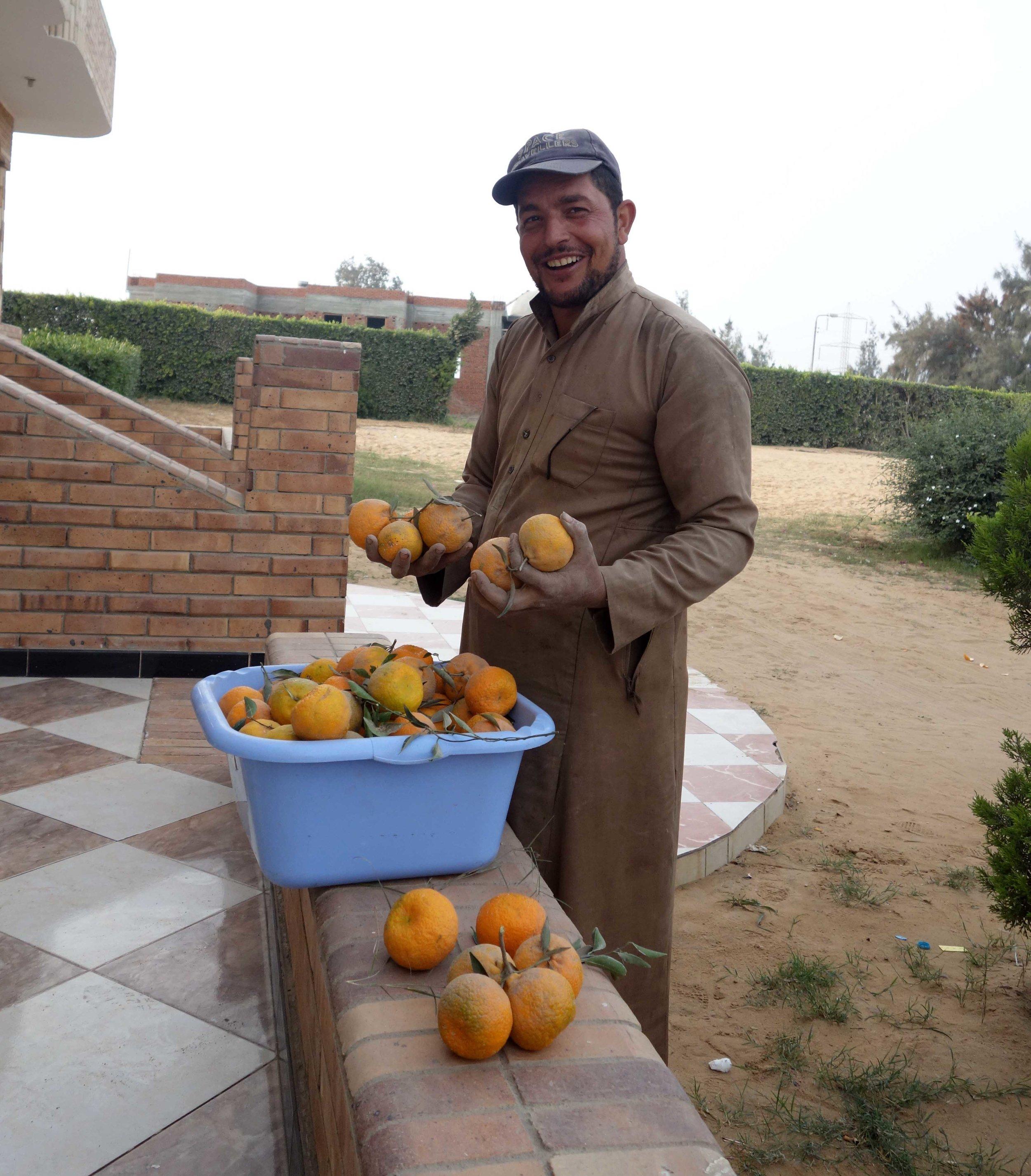 Merimde Beni Salama. Our daily ration of giant tangerines (photo: Giulio Lucarini)