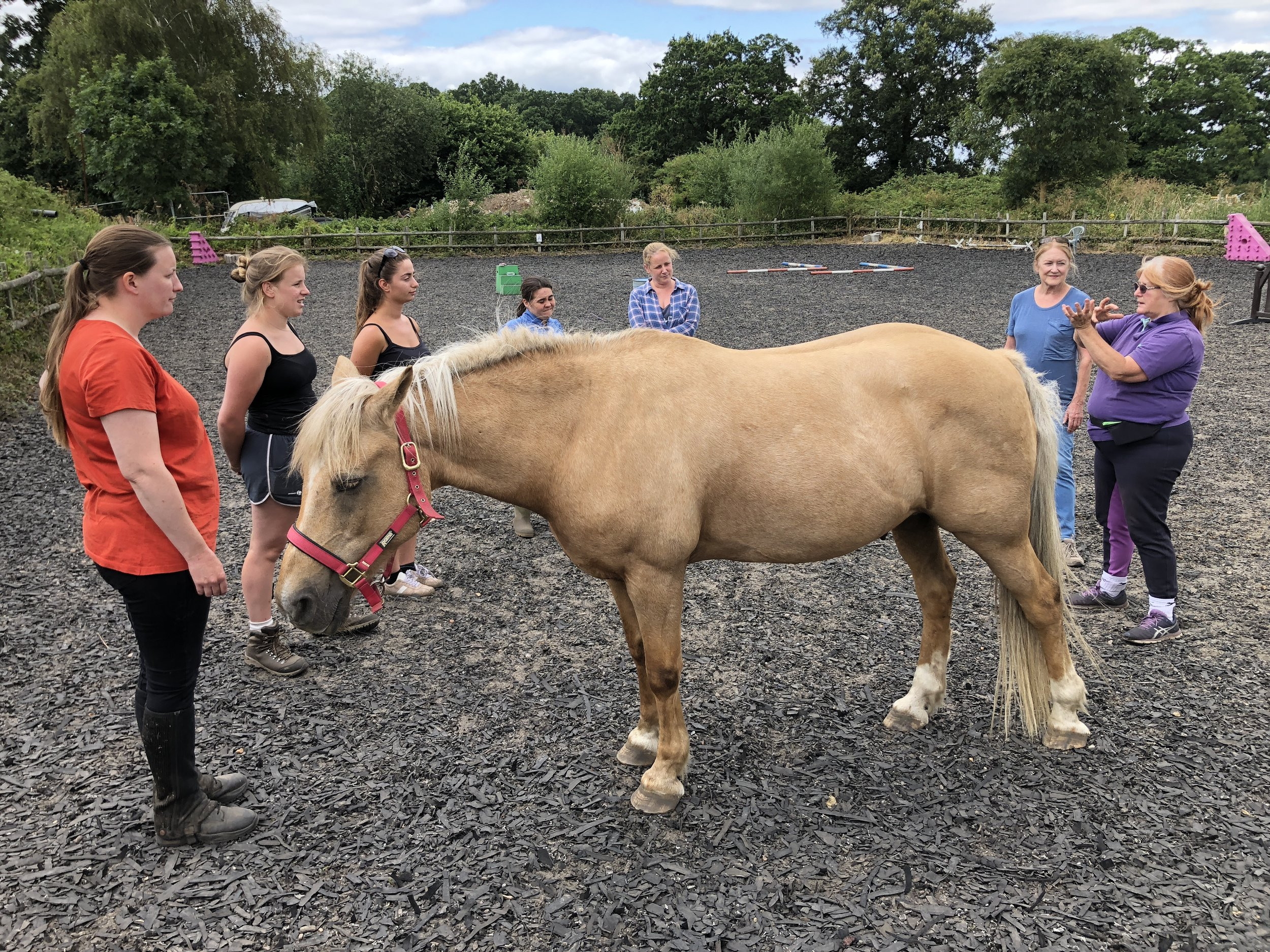 Team 'Vision, Mission and Goal Setting' with Brenbo, Holistic Horse and Pony Centre, UK