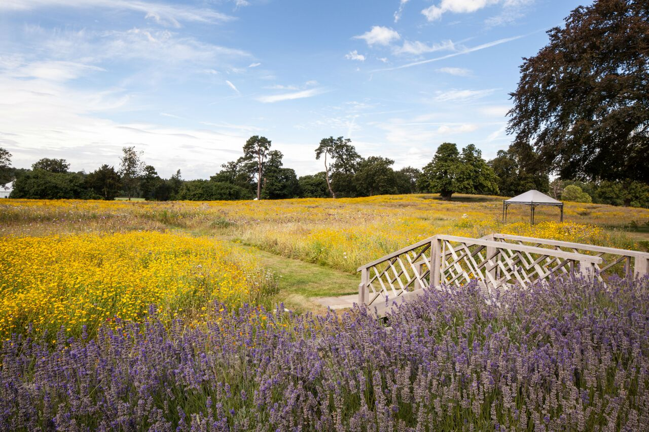 Exterior views across the meadow with lavender
