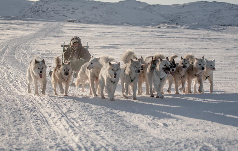 Sled Dogs outside Ilulissat, photo by Mads Pihl
