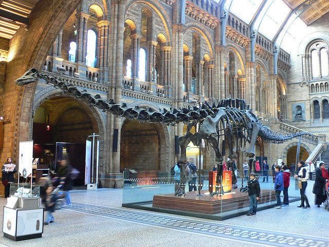 Museu istoria natural.jpg