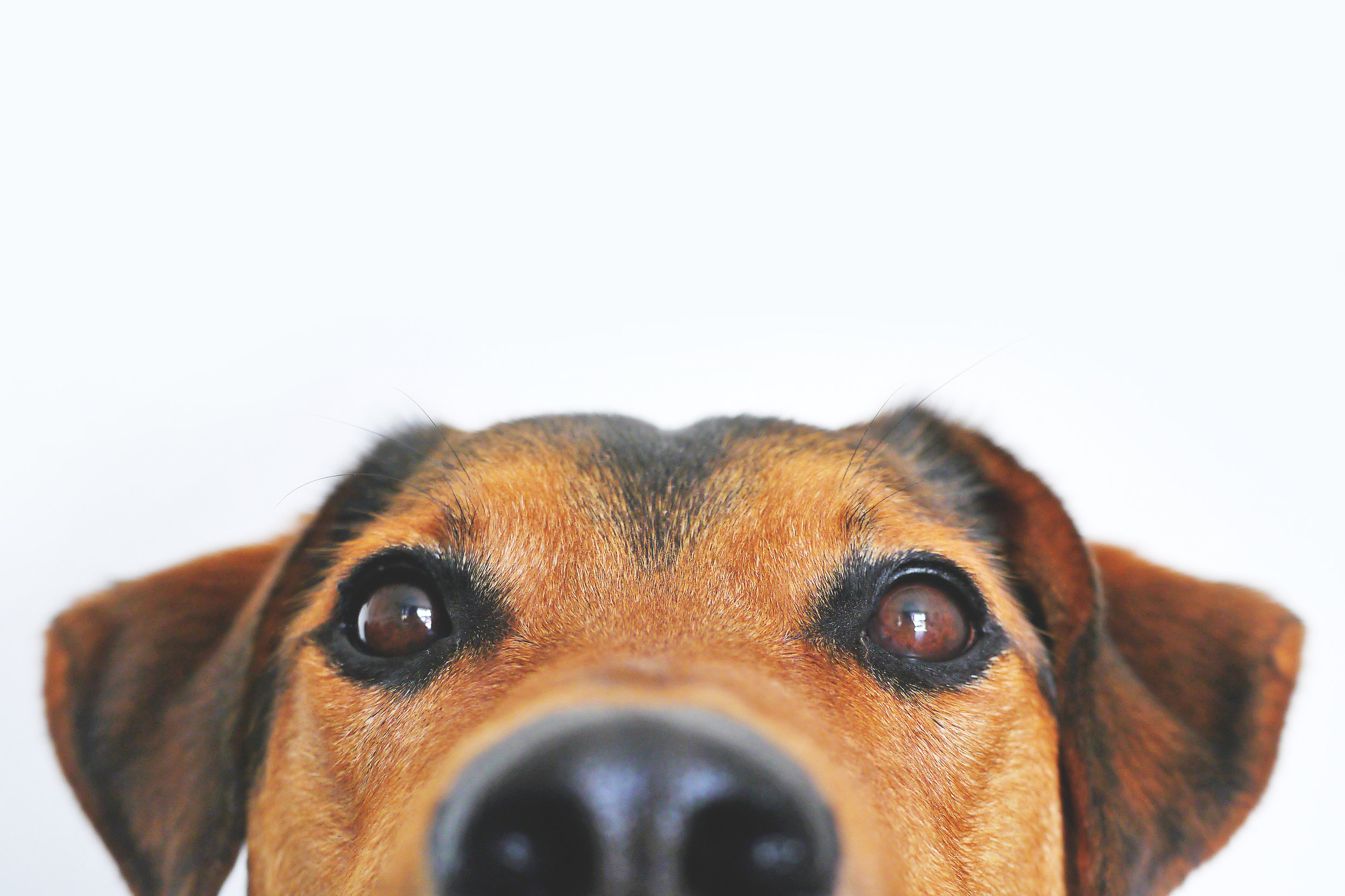 Dog head.jpeg