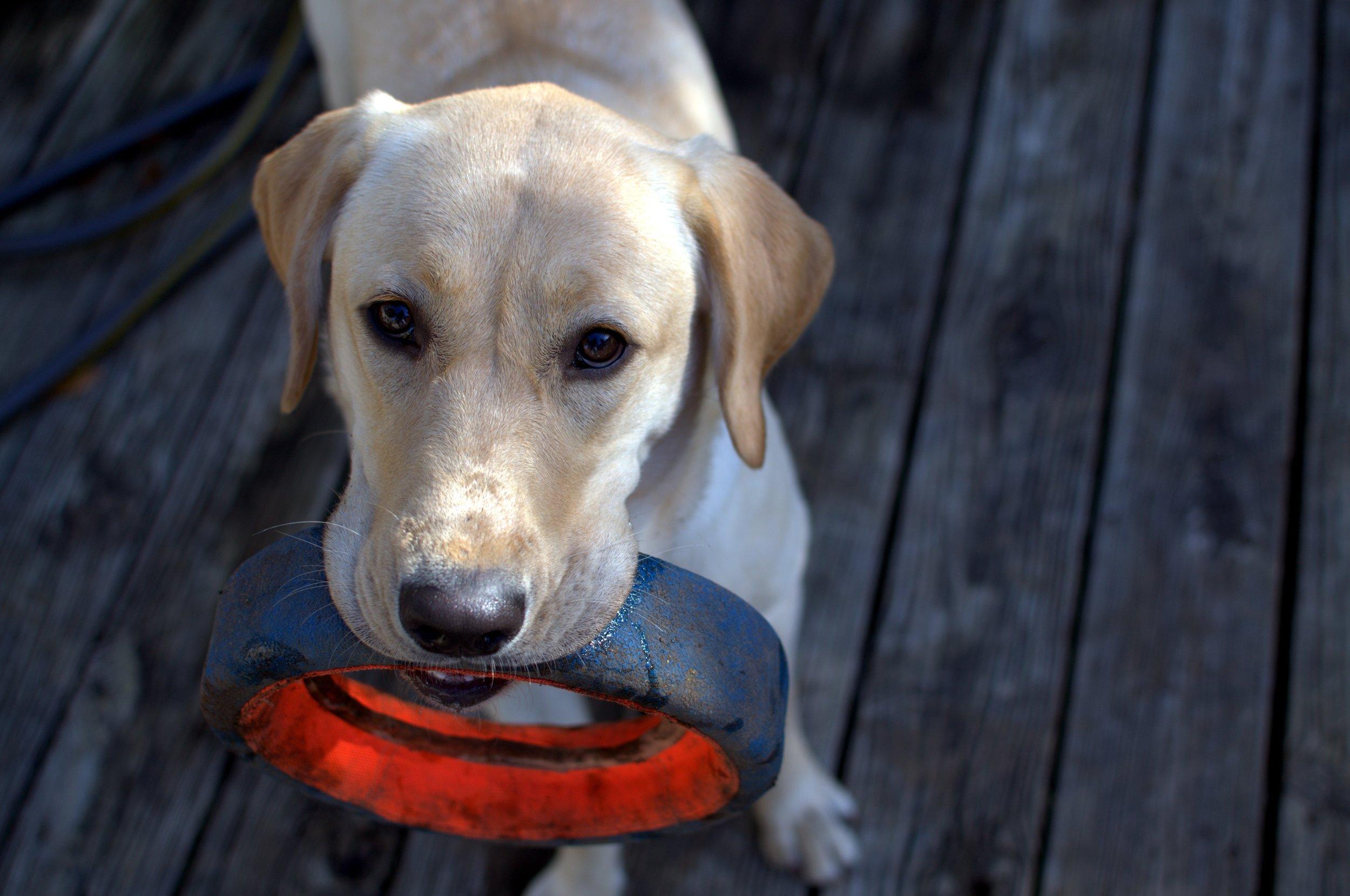 animal-animal-photography-dog-102508.jpg
