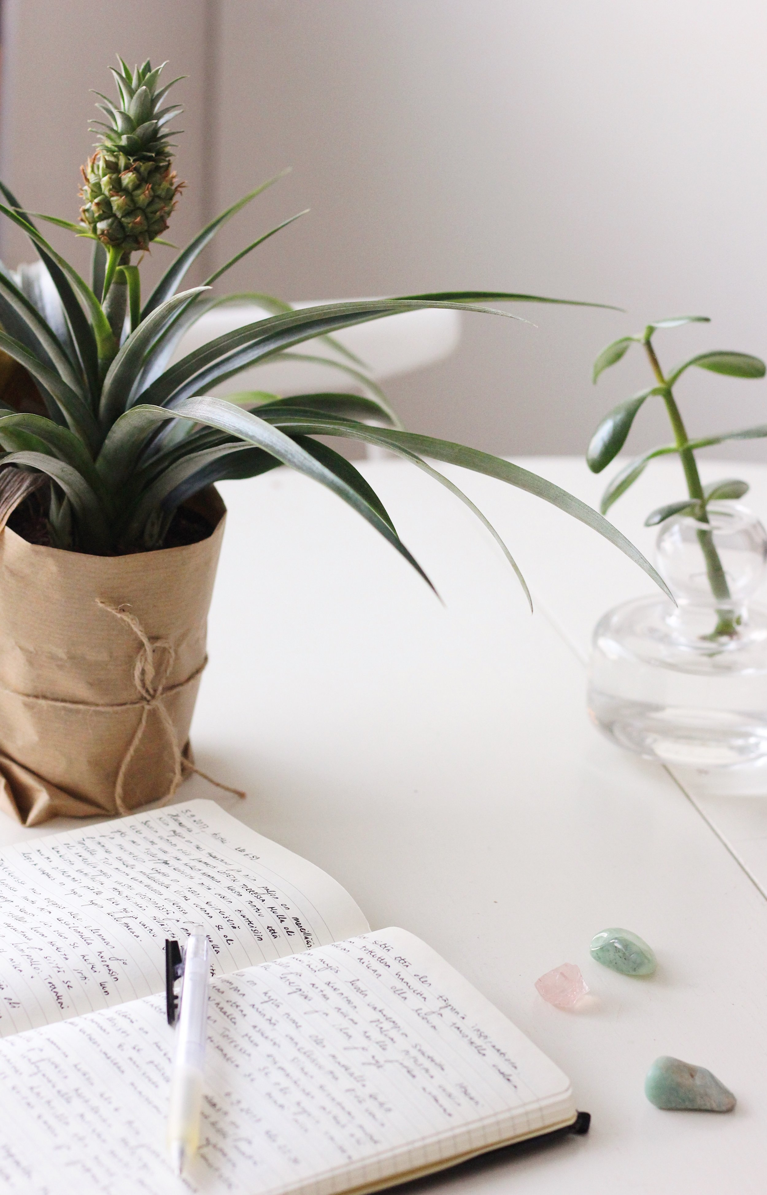 journaling, pineapple plants and crystals
