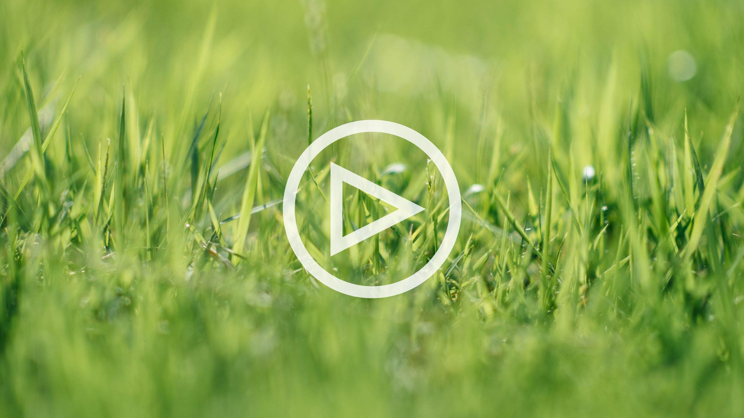 GC Linsberg Eröffnung auf WN TV - Video ansehen >