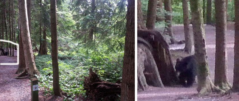 2-Bear-sighting-before-after.jpg