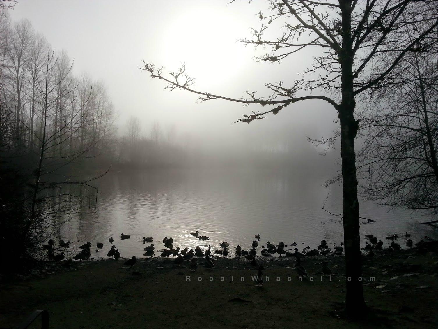 Morning-mist-RW-copyright.jpg