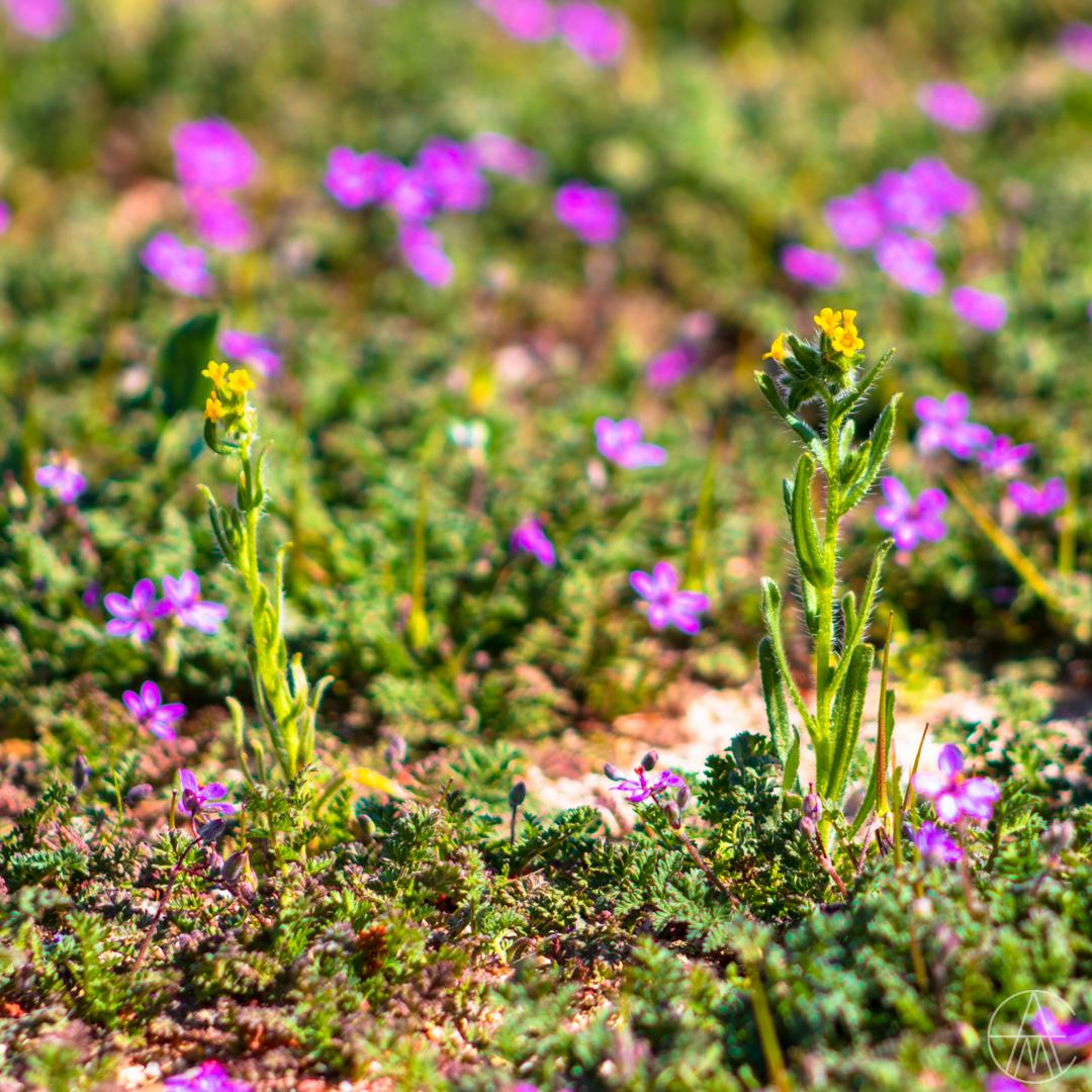 SpringBloom_Wildflowers-3358.jpg