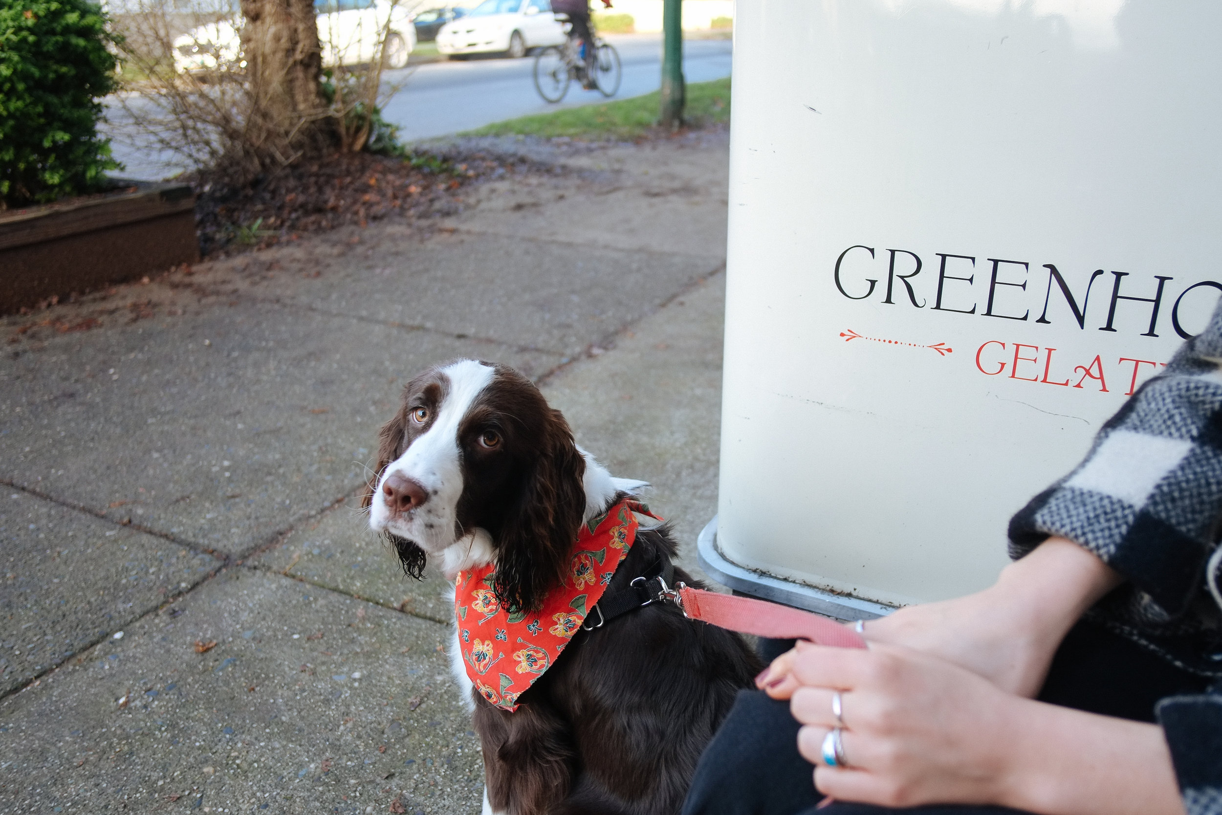 Greenhorn Cafe - 2017-12-09: Chats, coffee, and a pup. Greenhorn is my favourite spot in the West End and the best spot to hang outside with a coffee (even in December.)