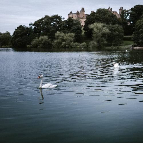 square-swans-by-victoria-elena-2.jpg