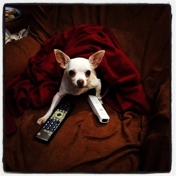 Cici watches Animal Planet  ~copyright LGHurcomb