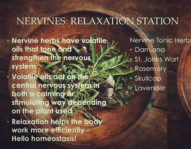 Relaxing herbs to add to your steam: damiana, st. Johns Wort, skullcap, rosemary. Warning do not put straight essential oils in your steam ever! Could cause chemical burns. These herbs work on our nervous system by ingesting them orally as well. Experiment and get to know them ♡ #plantallies #botanyissexy #nervines #selfcare #motherearthprovides #yonisteam #arvigowisdom #ATMAT #womenshealth #herbalwisdom #femalehealth #mayawisdom #damiana #st.johnswort #vaginalsteam