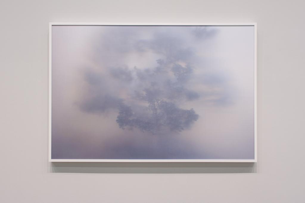Trace (Bonsai),    2017  , pigment print