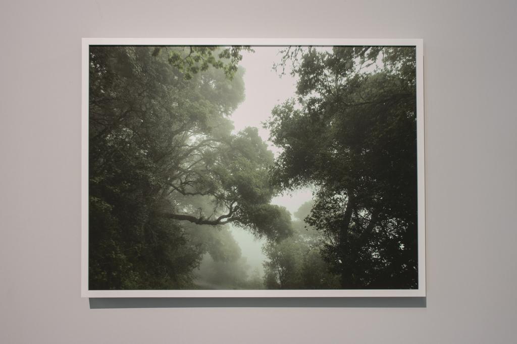 Green Daze   , 2017, pigment print