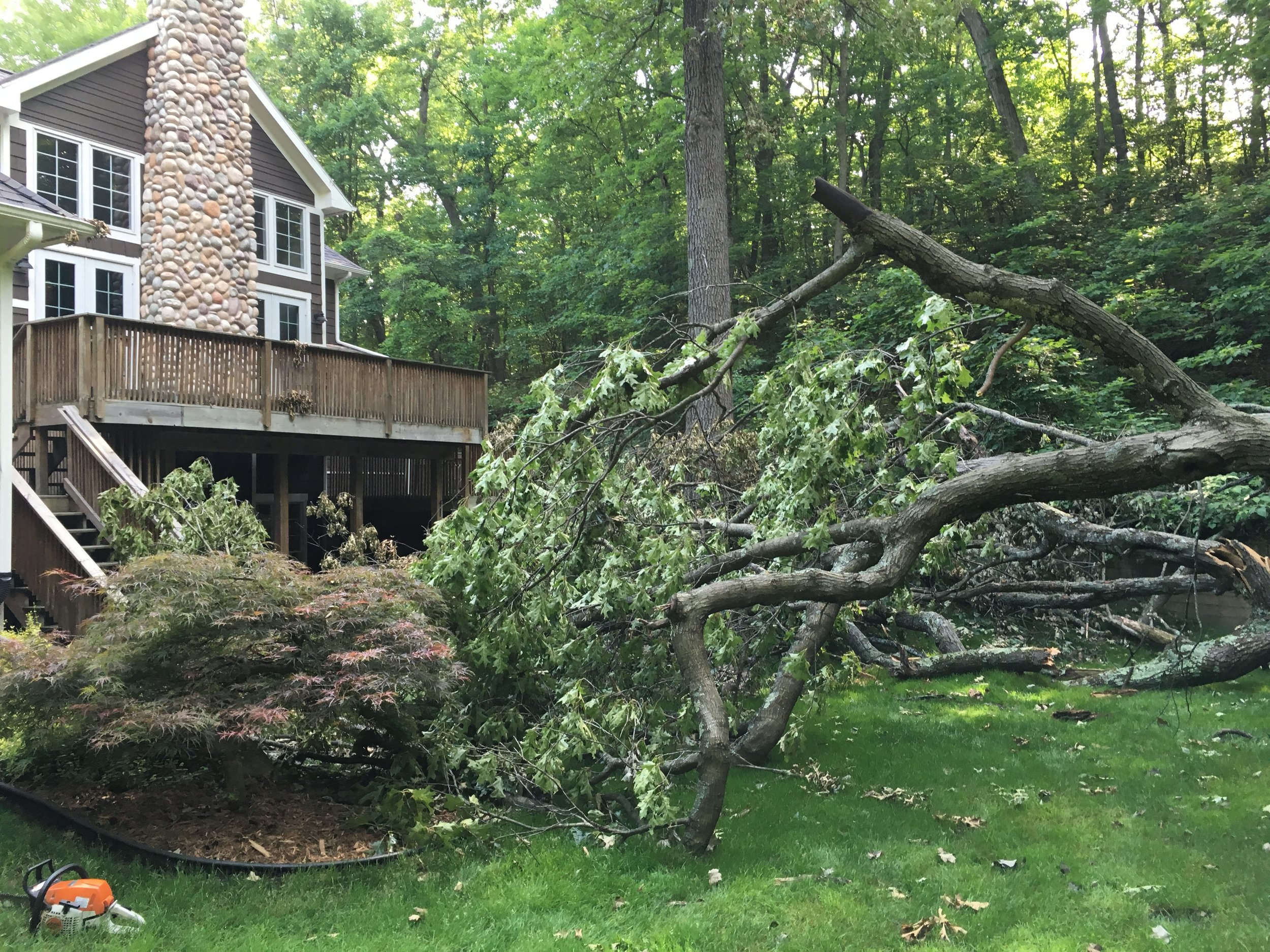 Even mighty Oaks can't withstand strong winds.