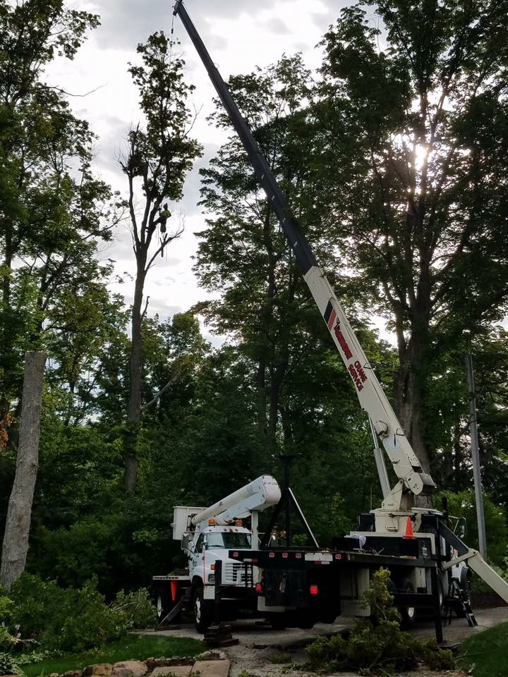 Six dying Maples next to a house on a lake. No problem. All removed without damage with the crane. See the climber in the tree below the crane ball?