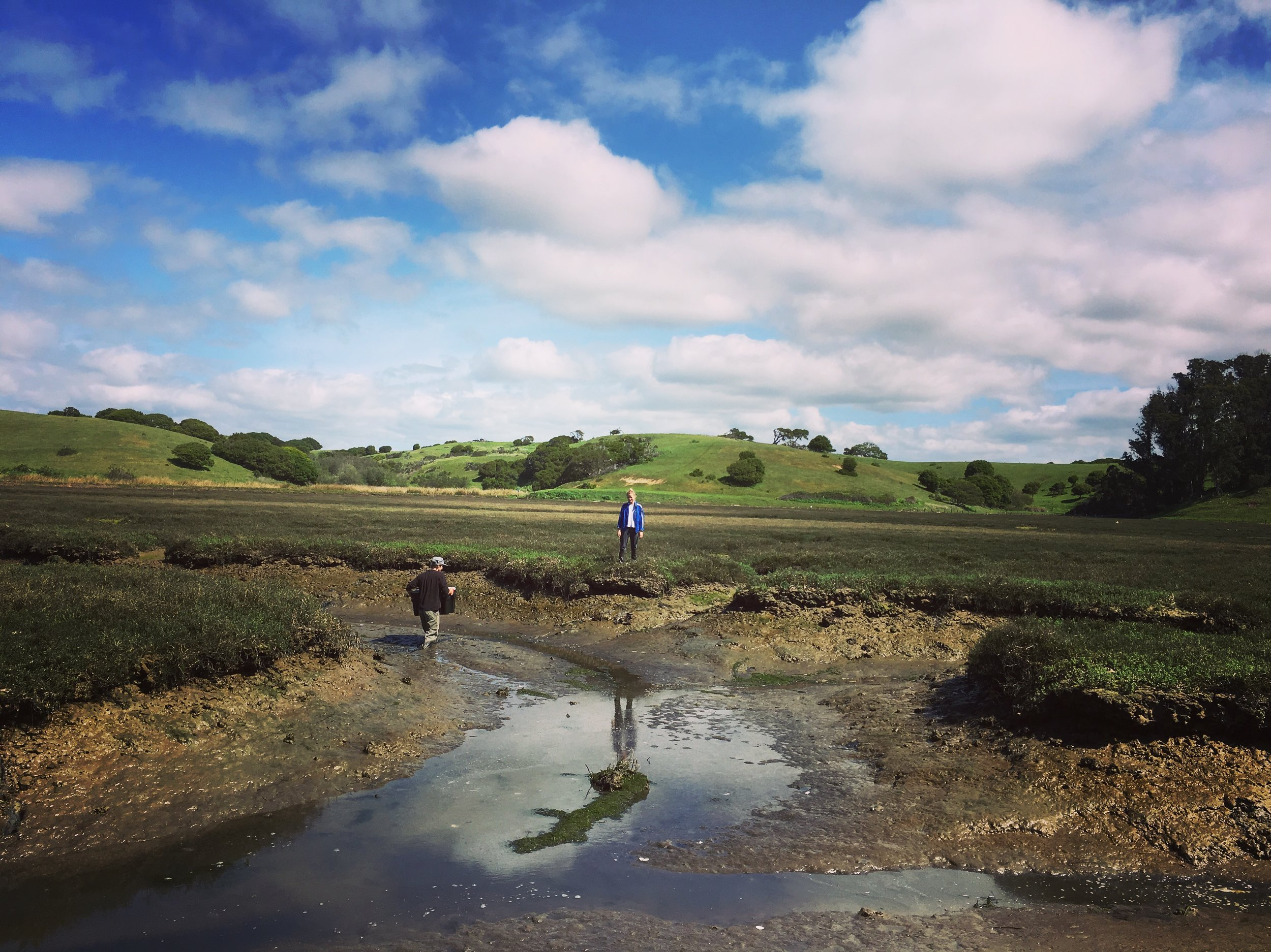 Elkhorn slough salt marshes at low tide is a site to be seen. No longer accessible by boat you have to get creative moving field gear, grab some boots or waders and trudge through the slough. The slower you go the more you sink, light quick feet for the win. #justsloughit #justsinkit #muddydays