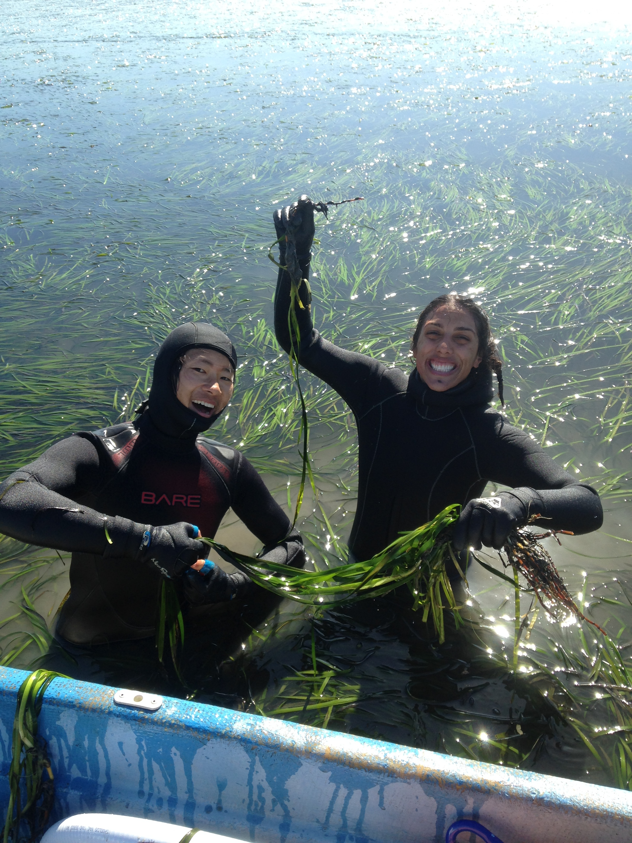 Happy with mud soul patches from harvesting eelgrass for our 2015 restoration! Pictured, UCSC undergraduate intern, Leo Hijikata  (left). #restoration