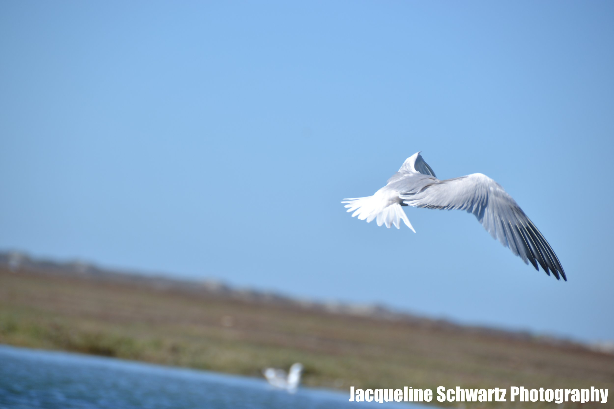 JSPhotography_DSC_0681.JPG
