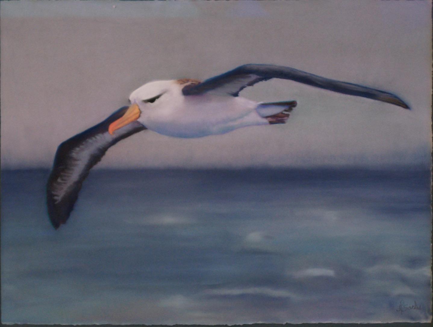 Black-Browed Albatross Always in Flight, Pastel, 20Hx26W, $475, Framed