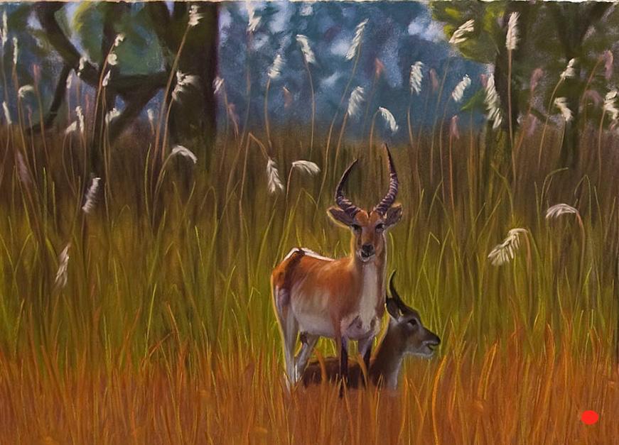 Tanzanian Water Buck and Baby, Pastel, 30Hx48W, SOLD