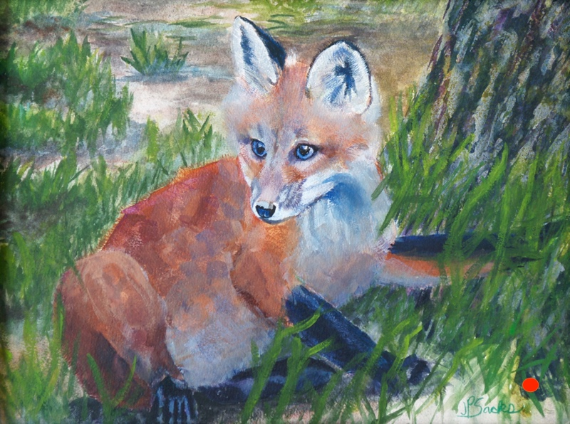 Plump Kit Fox, Watercolor, 12Hx16W, SOLD