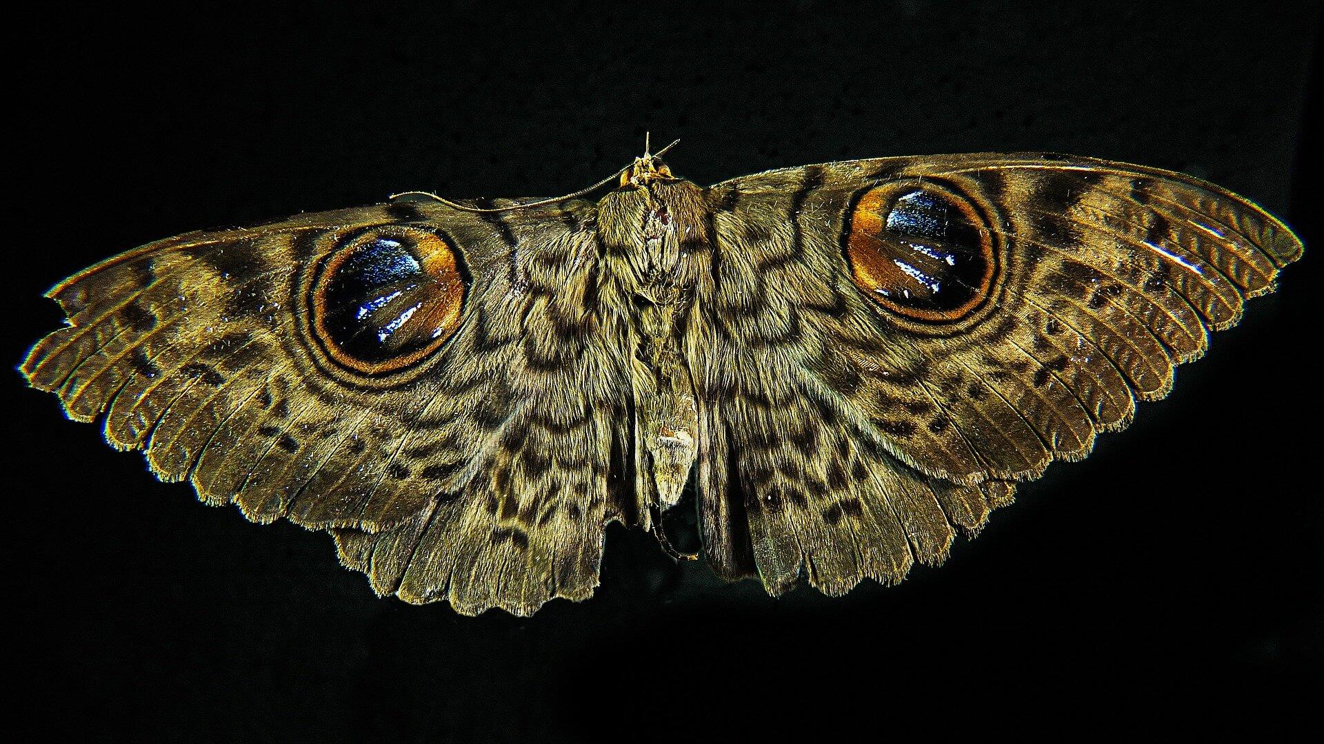 moth-195882_1920.jpg