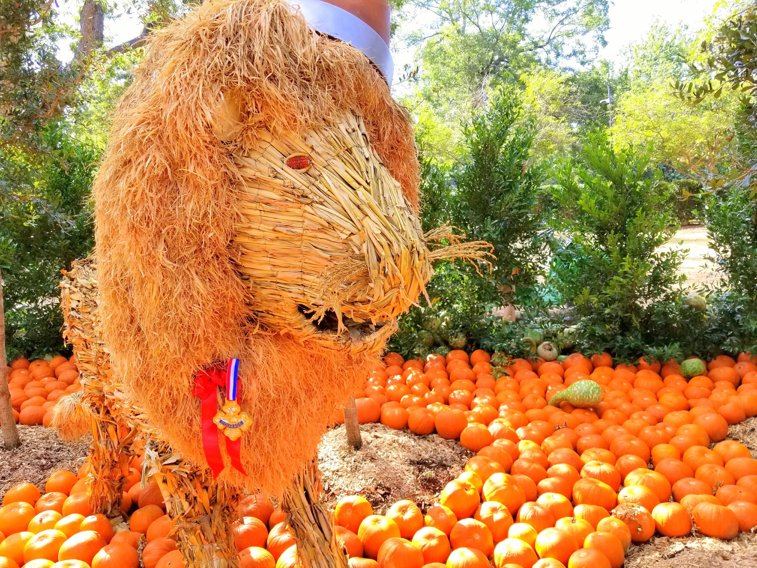 Dallas Arboretum celebrates Autumn with its annual themed pumpkin patch