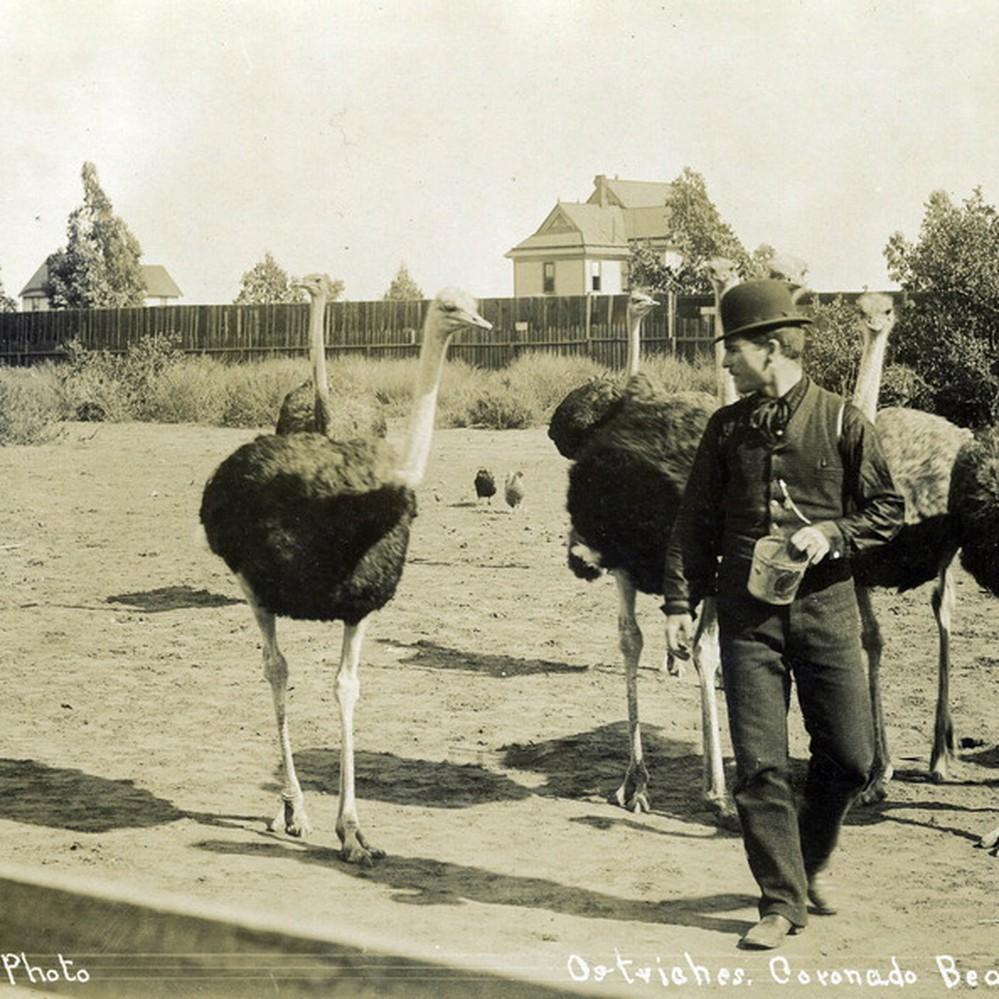 Coronado_Ostrich_Ancestry_Agency.jpg