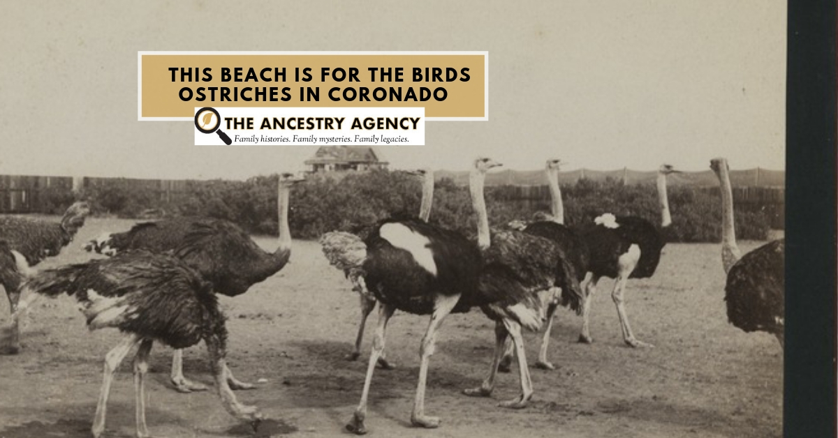 Ostrich_Coronado_Ancestry_Agency.jpg