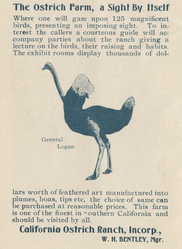 Ostrich_Coronado.jpg