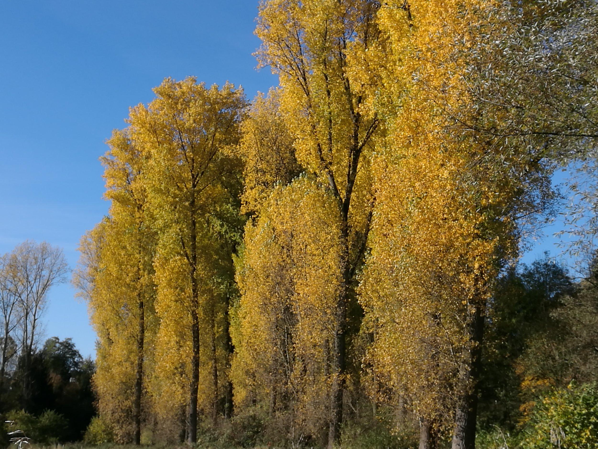 autumn fall trees Herbst Bäume