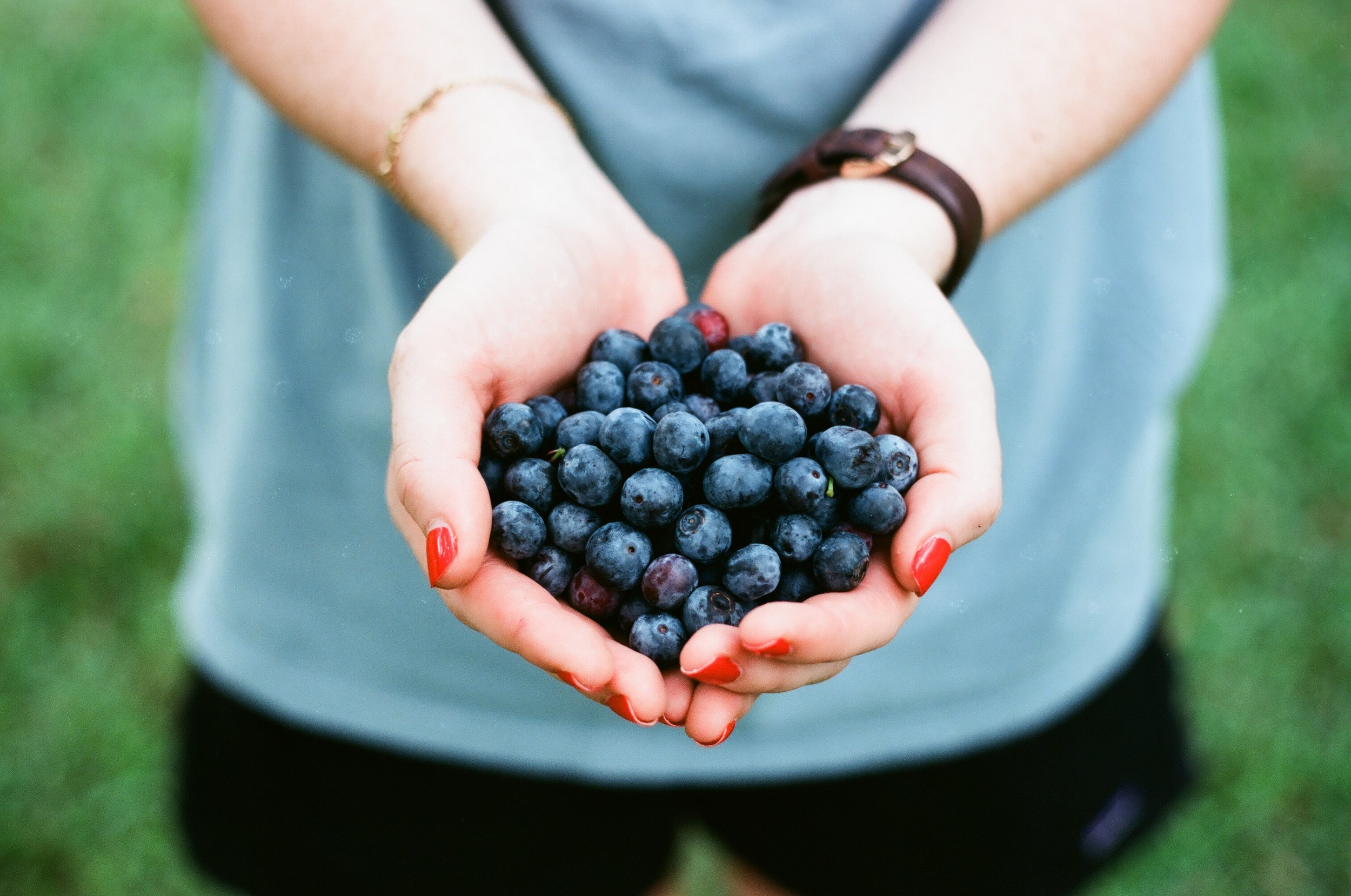 blueberry-Blaubeere-Heidelbeere-fruit-Sommer-Obst