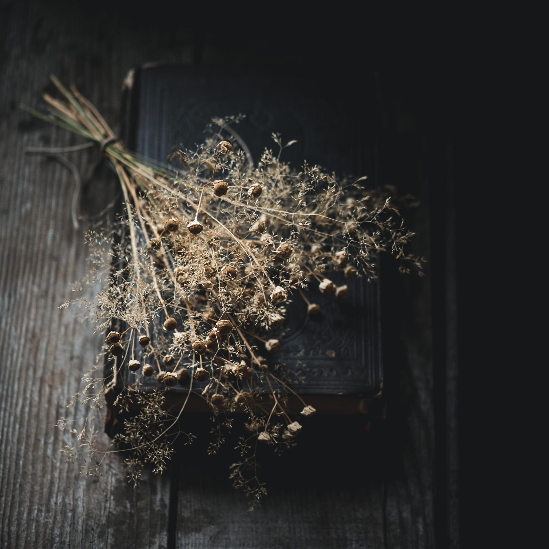poppybarach-3.jpg