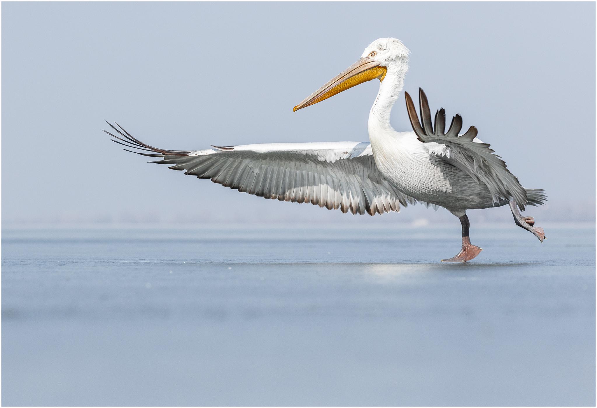 Bird - ANNE WHITELEIGH.jpg