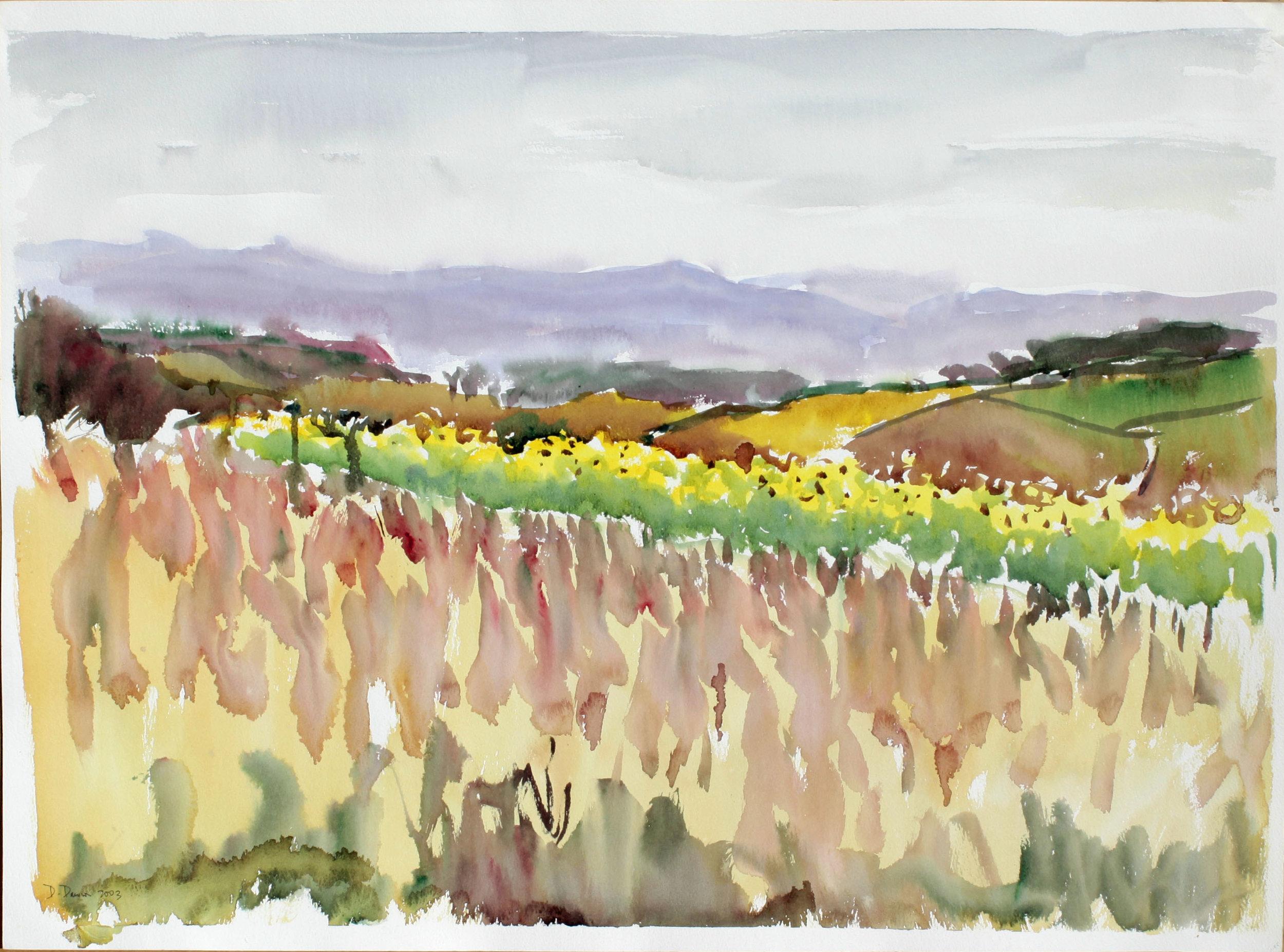 sunflowers_1842.jpg
