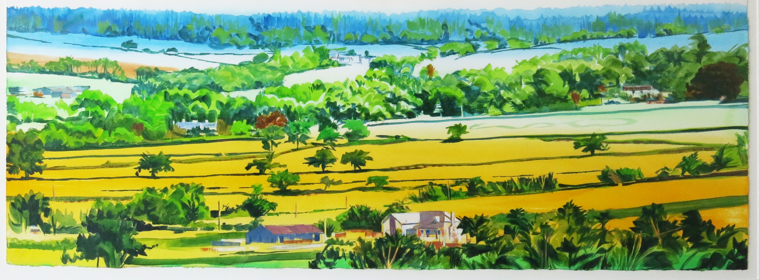 Yellow Fields, Looking towards Haldon woods. Acrylic.